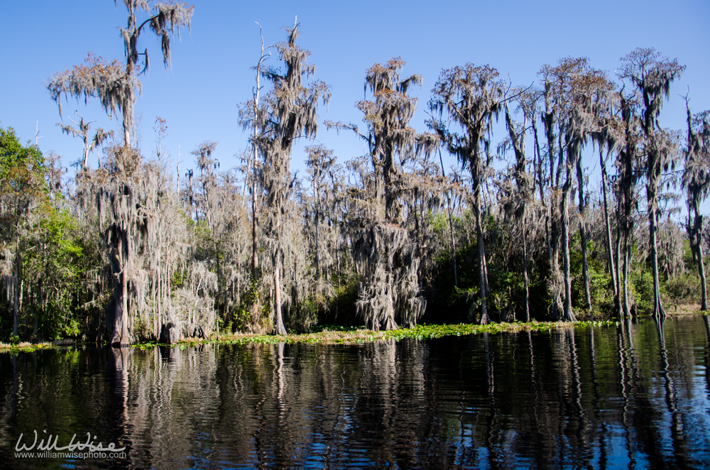 Okefenokee Swamp National Wildlife Refuge, Georgia
