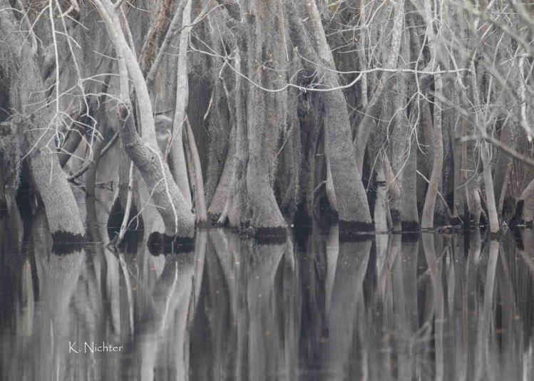 Swamp in the Fog